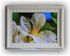 Fotoobraz f 40x60 cm + rám Lira Exclusive Nika bílá